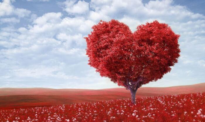 30 Contoh Puisi Cinta Untuk Pacar Ibu Sahabat Islami Romantis