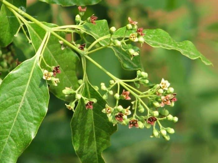 Flora di Wilayah Indonesia Timur