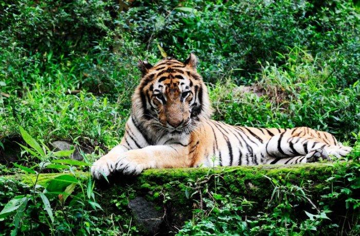 Pengaruh Letak Geografis Indonesia Terhadap Persebaran Fauna