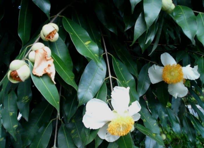 Pengaruh Letak Geografis Indonesia Terhadap Persebaran Flora