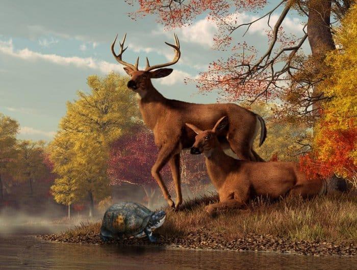 Cerita Fabel Rusa dan Kura-Kura