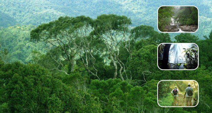 Manfaat Keanekaragaman Hayati