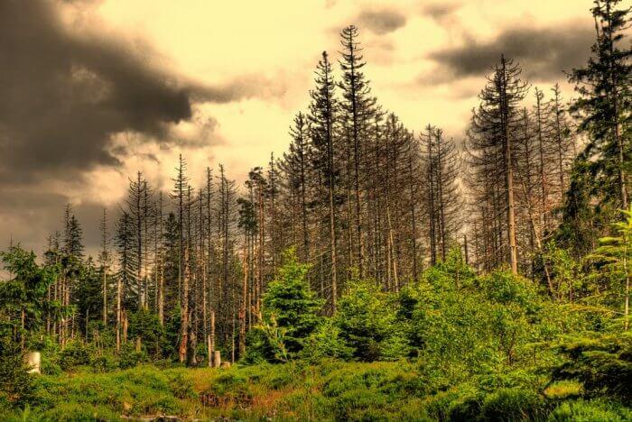 Macam Macam Ekosistem Beserta Pengertian, Komponen, Contoh