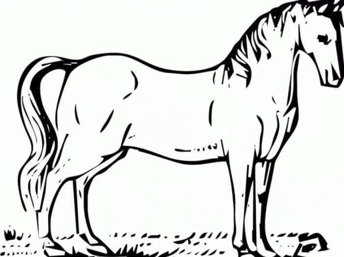 480 Koleksi Gambar Hewan Kuda Hitam Putih Gratis Terbaik