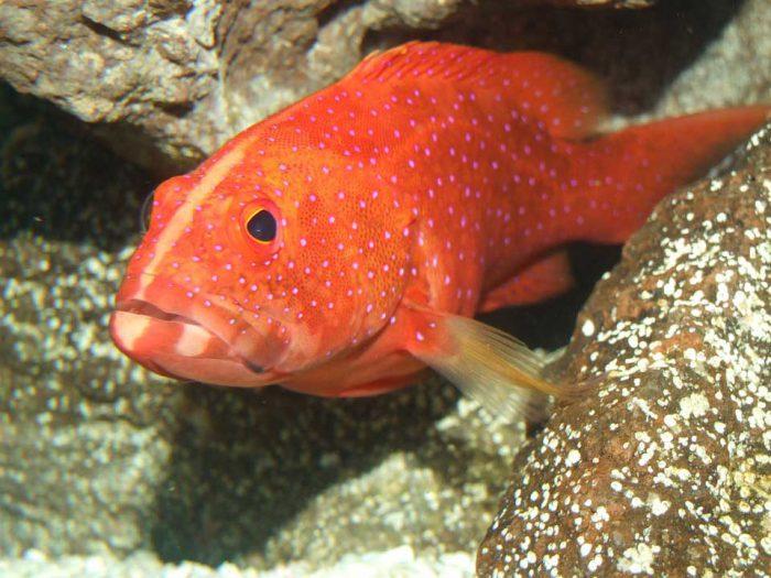 Jenis Jenis Ikan