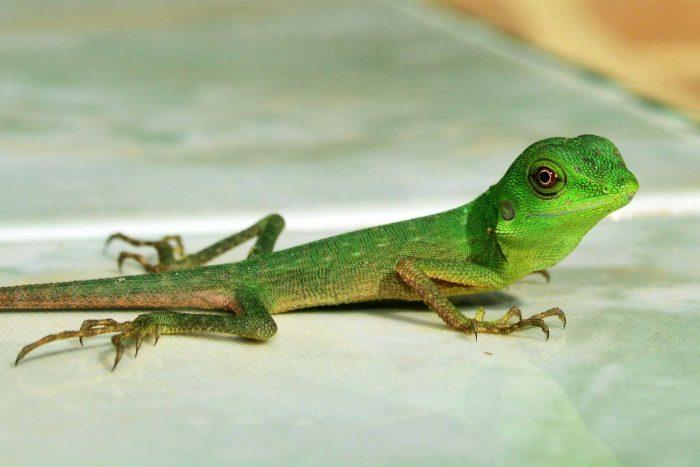 93 Gambar Hewan Peliharaan Reptil Terbaik