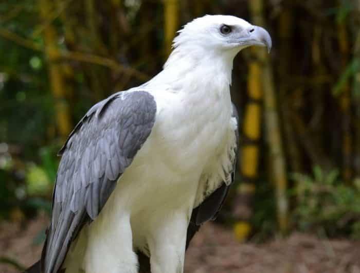 97 Foto Gambar Burung Elang Hinggap  Paling Unik Free
