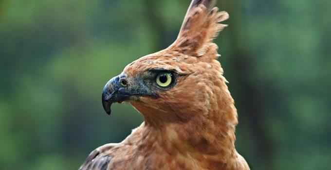 Burung Garuda Sejarah Makna Fakta Unik Lengkap