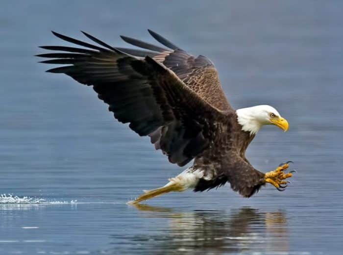 Download 70+ Foto Gambar Burung Elang Yg Besar HD Terbaru Gratis