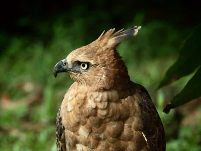 Sejarah dan Kisah Burung Garuda