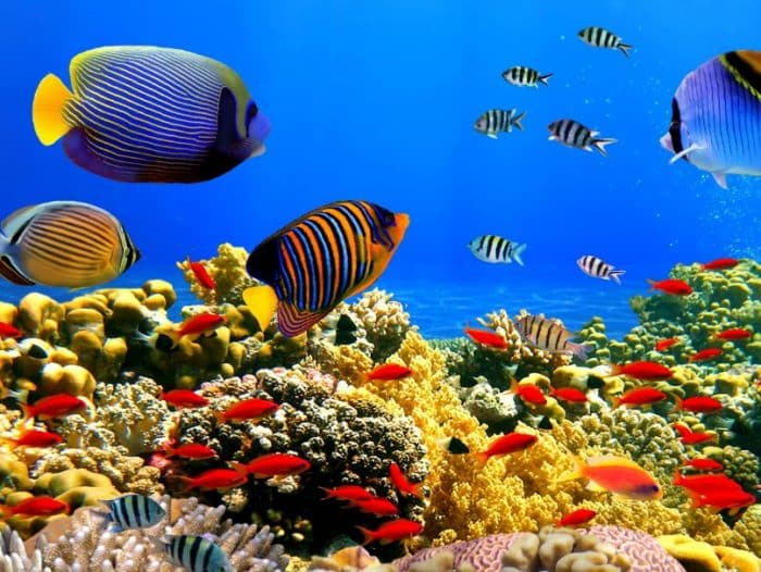 Ikan Dori