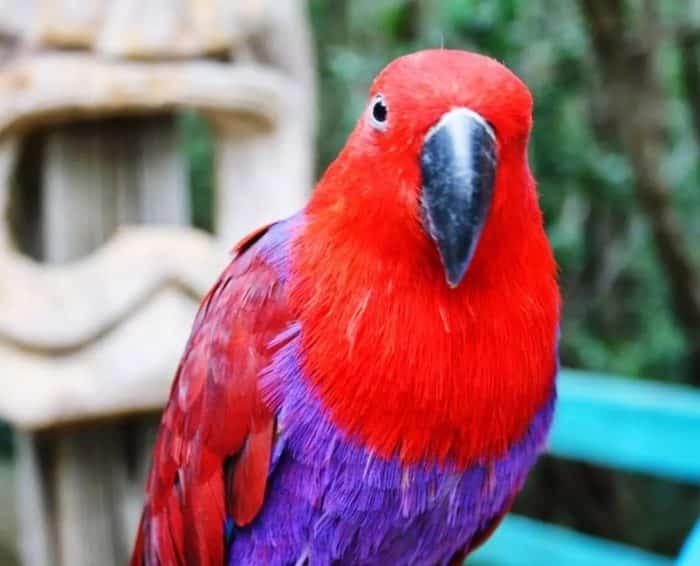 Burung Nuri Cara Merawat Pakan Harga Jual Lengkap