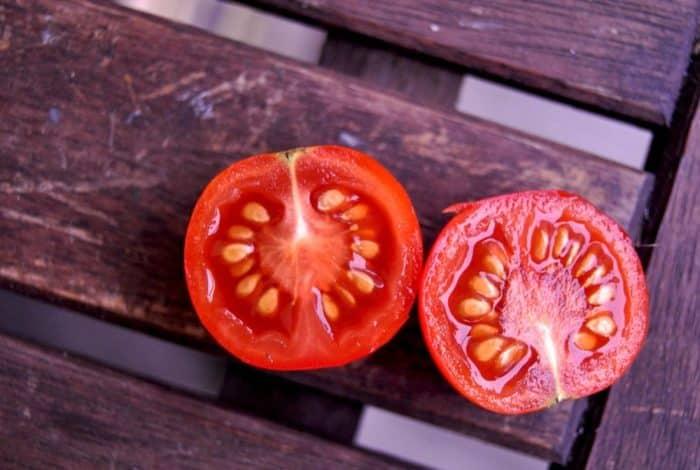 Cara Membuat Benih Tomat