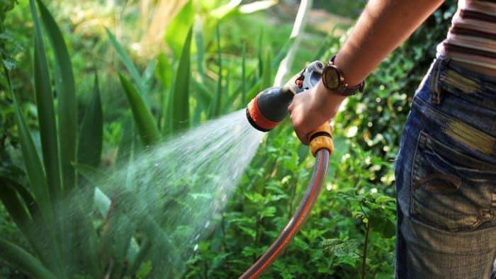 Lakukan Penyiraman Sesuai Porsi Tanaman