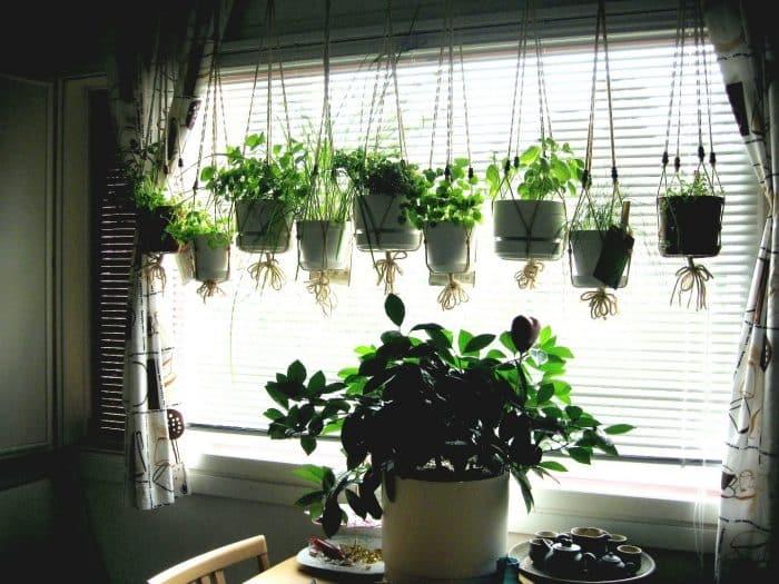 Mengenali jenis tanaman yang akan ditanam