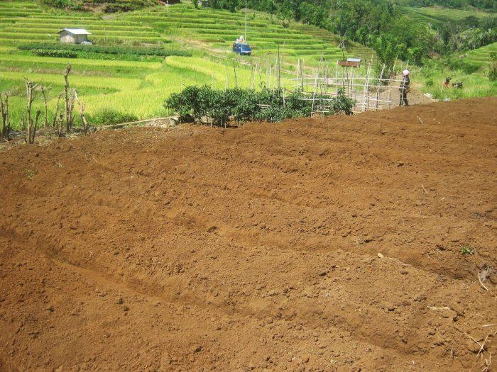 Menyiapkan lahan