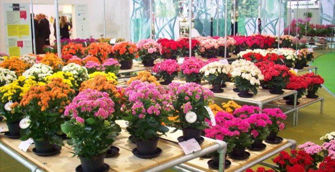 5 Tanaman Hias Bunga Pengertian 30 Ragam Jenis Bunga