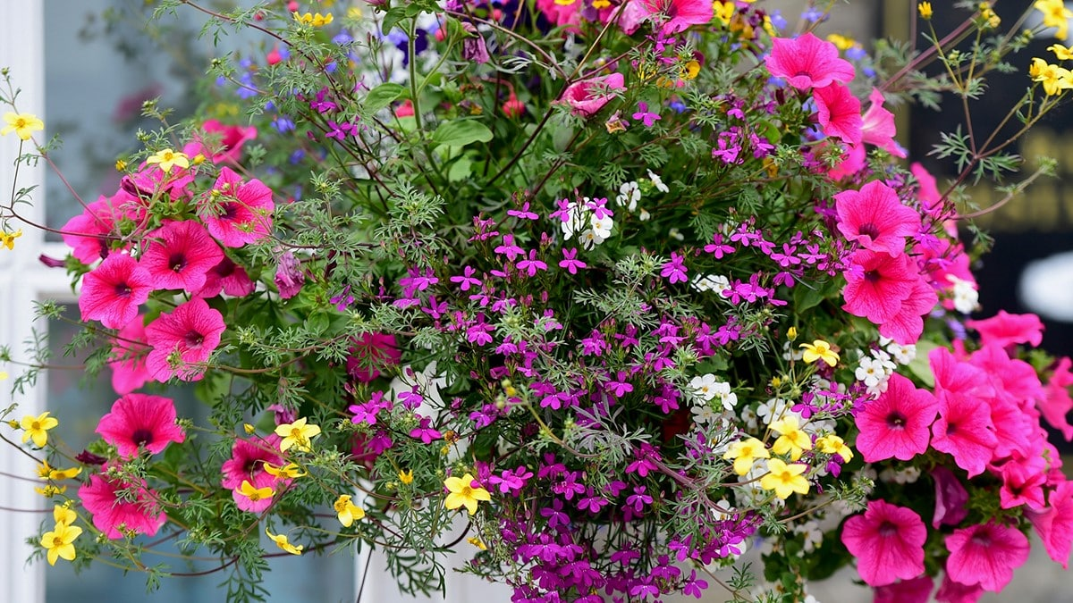 5 Tanaman Hias Bunga Favorit Lengkap Dengan Cara Menanam