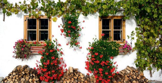 5 Tanaman Hias Outdoor Lengkap Dengan Manfaatnya